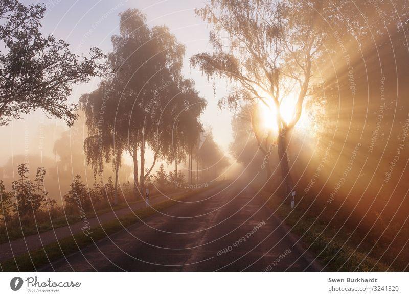 Bääääähm Sonne Fahrradfahren Joggen wandern Umwelt Natur Landschaft Sonnenaufgang Sonnenuntergang Frühling Sommer Herbst Schönes Wetter Nebel Baum Autofahren