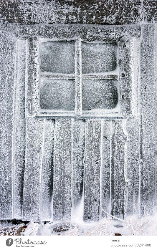 Kälte pur Winter Eis Frost Schnee Hütte Mauer Wand Fenster Holzwand kalt natürlich Einsamkeit Erschöpfung Sprossenfenster gefroren Kälteschock Farbfoto