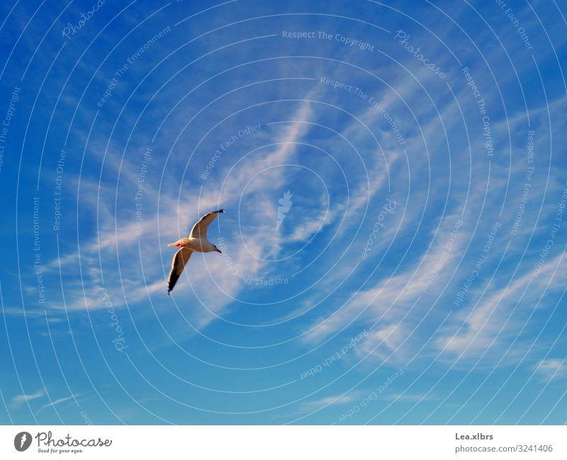 Freiheit Umwelt Natur Luft Himmel Wolken Sonne Sommer Herbst Wetter Schönes Wetter Wärme Küste Strand Bucht Meer Tier Wildtier Vogel Flügel Möwe 1 entdecken