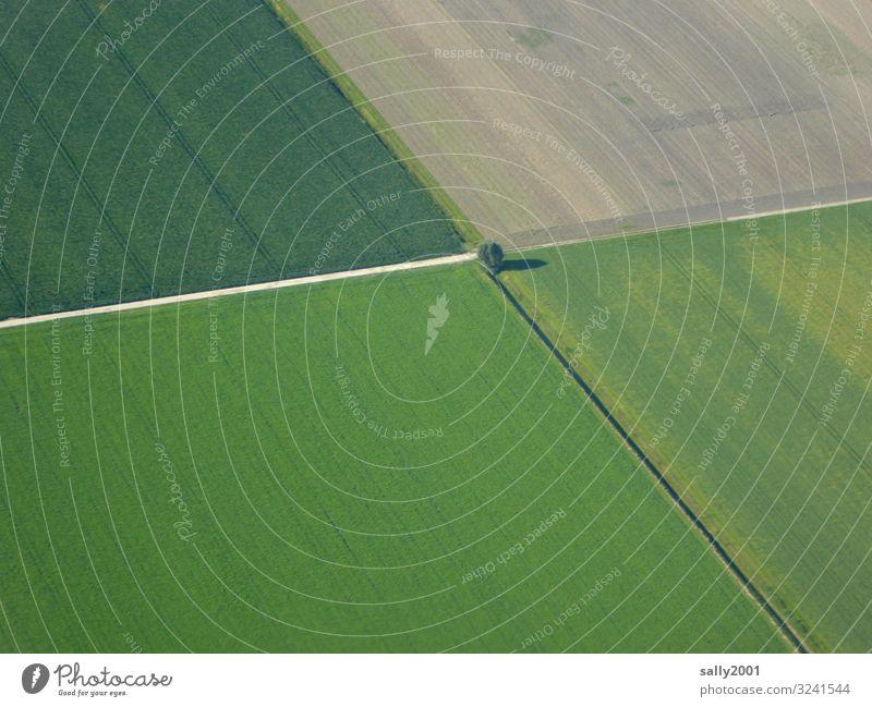 flurbereinigt... Landschaft Baum Feld Wege & Pfade Wachstum groß Einsamkeit Ordnung Landwirtschaftliche Geräte Getreidefeld rechtwinklig grün Wegkreuzung