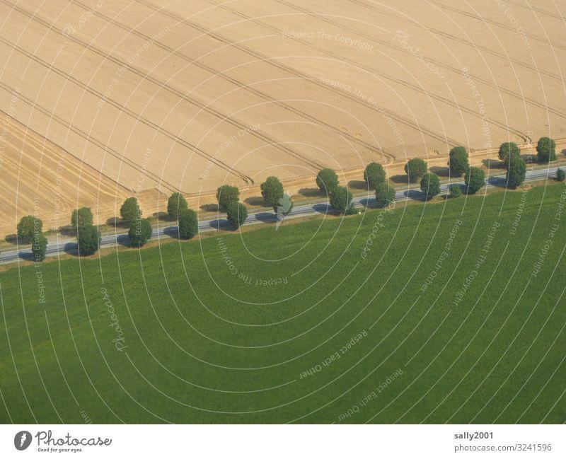 Allee... Landschaft Baum Wiese Feld Straße Wege & Pfade Landstraße ästhetisch gerade geradeaus Landwirtschaft zweireihig Symmetrie paarweise perfekt Farbfoto