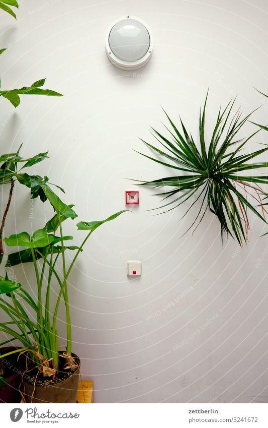 Pflanzen im Treppenhaus Haus Wand Textfreiraum Lampe Häusliches Leben Raum Feuer Brand Wohnhaus Palme Schalter Wohngebiet Stadthaus