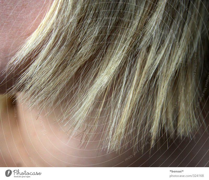 frisch geschnitten schön Haare & Frisuren feminin 1 Mensch blond Wachstum Spitze Haarspitze Haarfarbe Farbe Farbfoto Innenaufnahme Detailaufnahme Tag