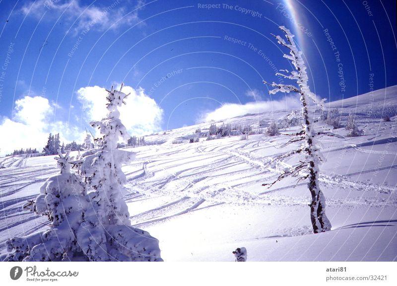 versauter Hang Himmel blau Baum Wolken Berge u. Gebirge Schnee Schönes Wetter Skifahren Tanne Skigebiet Blauer Himmel Skipiste Tiefschnee Schneespur Wintersport Sport