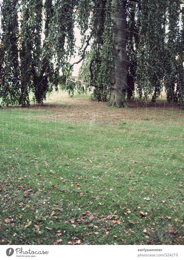 Um den Sommer Trauer-Weide Umwelt Natur Pflanze Herbst Klima Baum Blatt Garten Park Wiese Traurigkeit Trauerweide Herbstlaub herbstlich Herbstbeginn Rasen grün