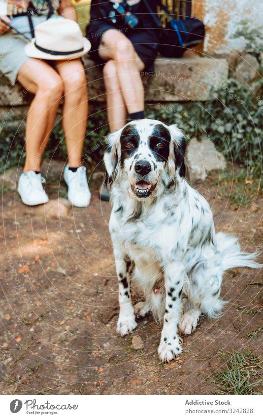 Schwarz-weißer flauschiger Hund am Boden, der in die Kamera schaut Menschen Haustier Sommer heiter Tier Zusammensein Natur heimisch Eckzahn niedlich Besitzer