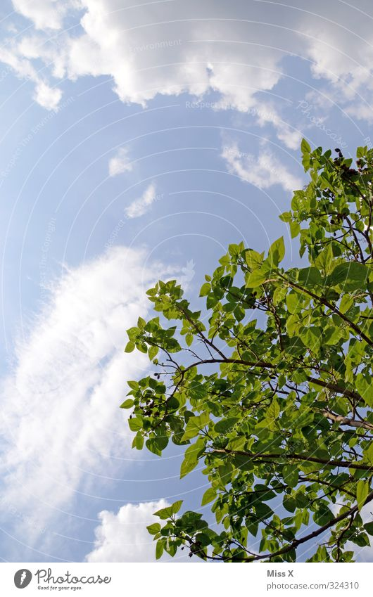!trash! 2013 | 14.05.2011 darf endlich raus Himmel Wolken Frühling Sommer Klima Wetter Schönes Wetter Baum Blatt Wachstum groß hoch blau grün Baumkrone