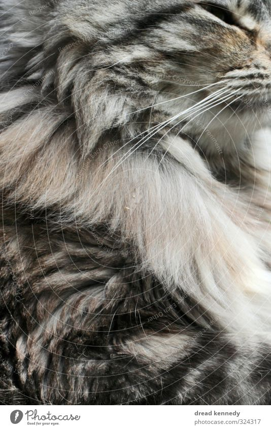 Kätzchen Katze schön Tier Auge Haare & Frisuren nah Fell Haustier Katzenbaby