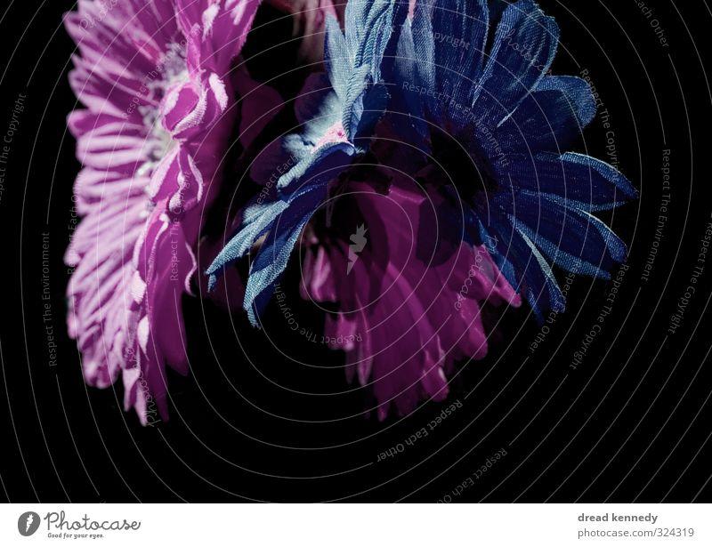 Blumen Pflanze Sommer schön Blüte Frühling elegant ästhetisch einzigartig Blumenstrauß verblüht Flowerpower