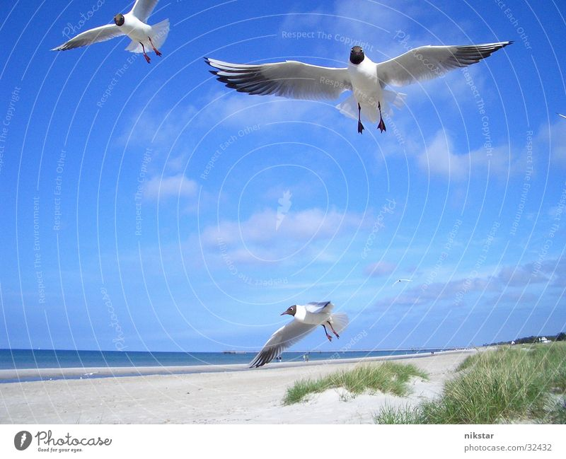 Möwen Wasser Himmel Meer Strand Vogel fliegen Ostsee Mecklenburg-Vorpommern Darß