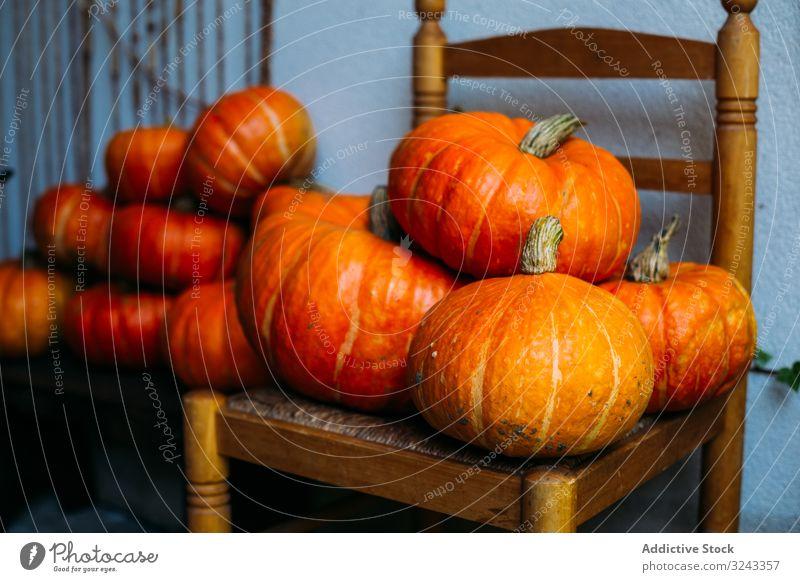 Orange glänzende Kürbisse auf Stühlen komponiert Ernte Herbst fallen pulsierend Feiertag Ordnung Sammlung Ackerbau Stuhl frisch Schnitzereien orange Entzug