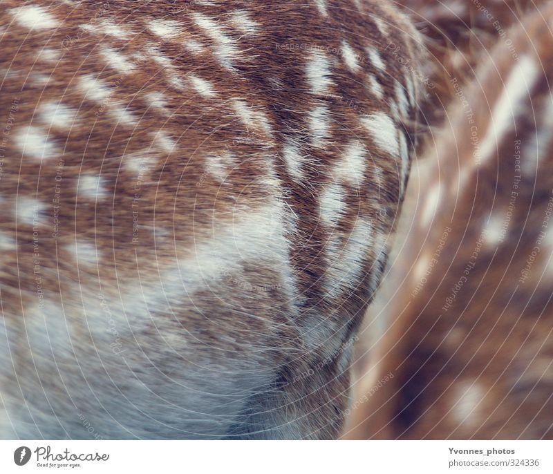 bambi Tier Wildtier Zoo 2 Zusammensein Tierliebe Reh Rehkitz Bambi Fell gepunktet Farbfoto Gedeckte Farben Außenaufnahme Nahaufnahme Detailaufnahme