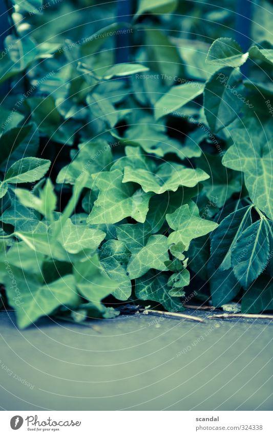 Plant Green Natur Pflanze Sommer Gefühle ruhig Zufriedenheit Lignano Farbfoto Außenaufnahme Detailaufnahme Tag Licht Schwache Tiefenschärfe Blume Stengel