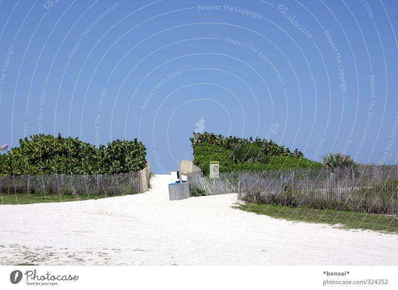 ab durch die hecke Landschaft Sand Wolkenloser Himmel Sommer Schönes Wetter Sträucher Hügel Strand Wege & Pfade Zaun Erholung Wachstum hell natürlich Wärme