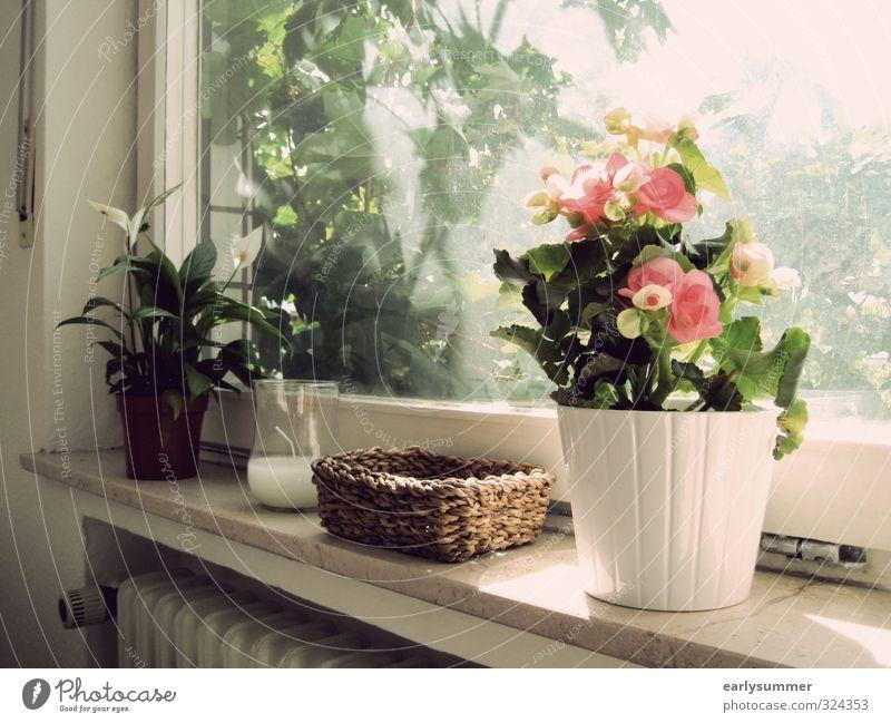 Sommer vorm Balkon Natur Pflanze schön grün weiß Baum Blume Blatt Wärme Blüte Frühling hell braun rosa Häusliches Leben