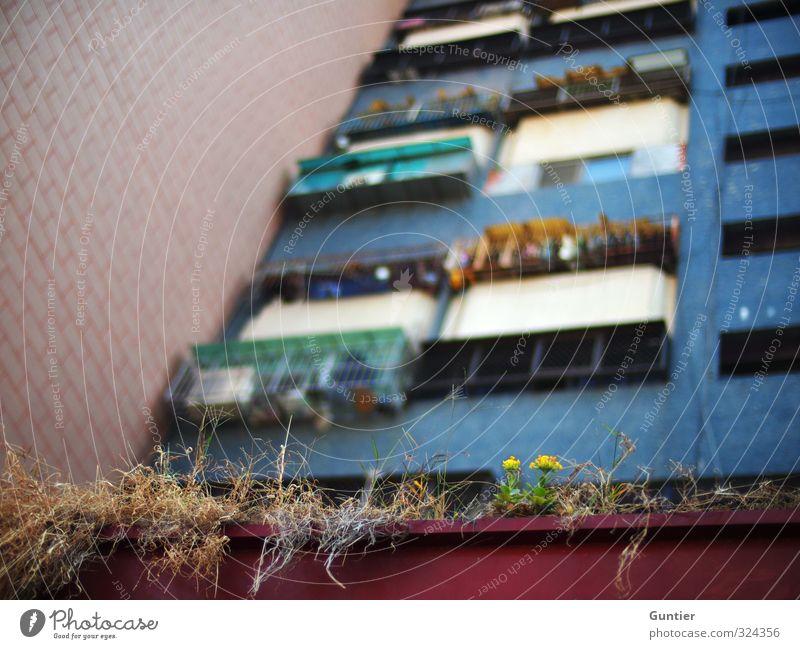 Zukunft Taiwan Asien Stadt Hafenstadt Stadtrand überbevölkert Menschenleer Haus Hochhaus blau braun gelb grün rot schwarz Balkon Balkonpflanze vertrocknet Wand