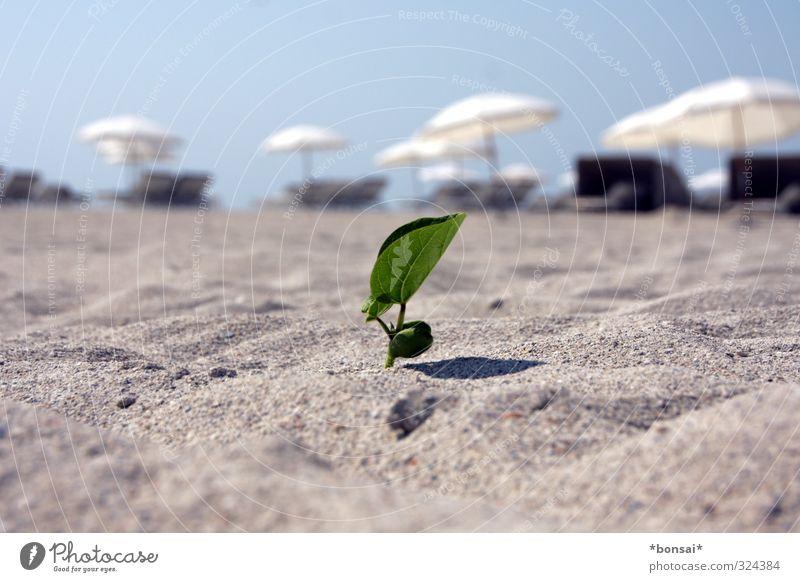 frühling! überall! Erholung Strand Sand Sonne Sommer Schönes Wetter Pflanze Blatt Grünpflanze Blühend Wachstum außergewöhnlich hell klein natürlich Wärme