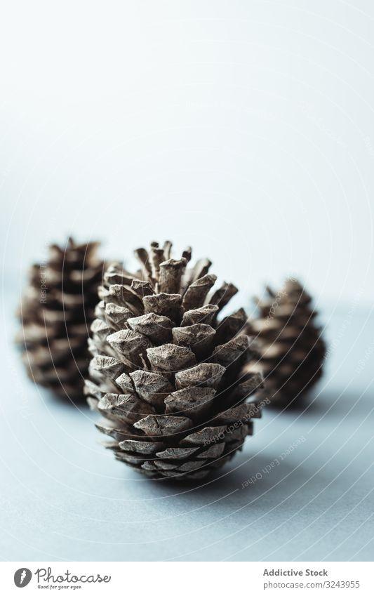 Natürliche kieferbraune Zapfen zur Feiertagsdekoration Kiefernzapfen Weihnachten Dekoration & Verzierung festlich Raureif Winter Saison fröhlich Minimalismus