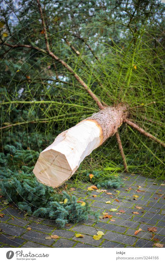 Geschlagen Weihnachten & Advent Landwirtschaft Forstwirtschaft Herbst Winter Baum Tanne Nadelbaum Baumstamm liegen frisch Handel kahl gefallen Baum fällen
