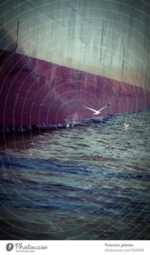 Freedom Umwelt Klimawandel Wellen Meer Schifffahrt Binnenschifffahrt Containerschiff Öltanker möve Möwe dunkel frei Wand Hafen Hamburg Hafenstadt Farbfoto