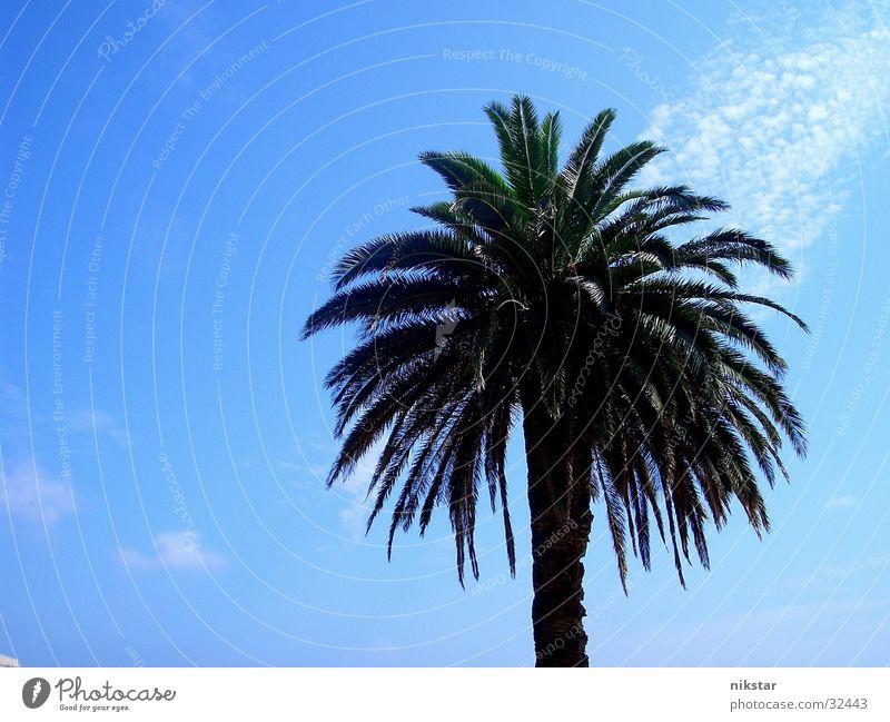 la palm Palme Strand Sommer Pflanze Baum grün Blatt Sonne blau Himmel Schönes Wetter Baumstamm