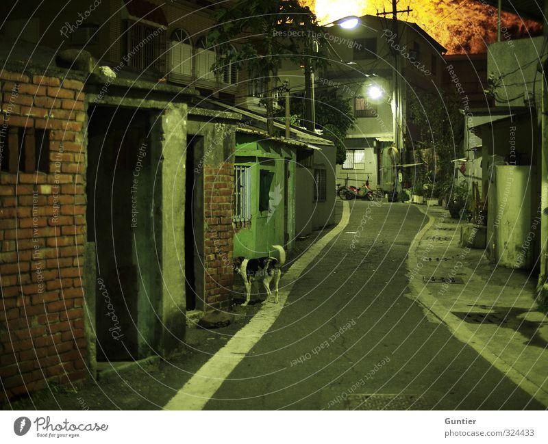 Nachtleben Asien braun gelb grün weiß Gasse Ziegelbauweise Backstein Hund Tier 1 Laterne Bruchbude alt verfallen Verfall Baum Gully schmal Straßenbelag Angst