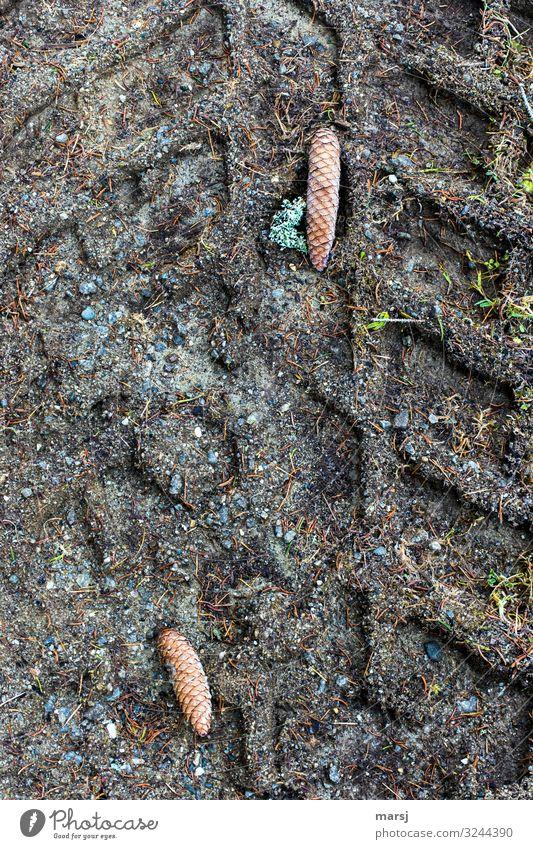Letztens beim Spaziergang Herbst Eis Frost Fichtenzapfen Erde Flechten dunkel authentisch eckig einzigartig kalt Traurigkeit Unlust Enttäuschung Einsamkeit