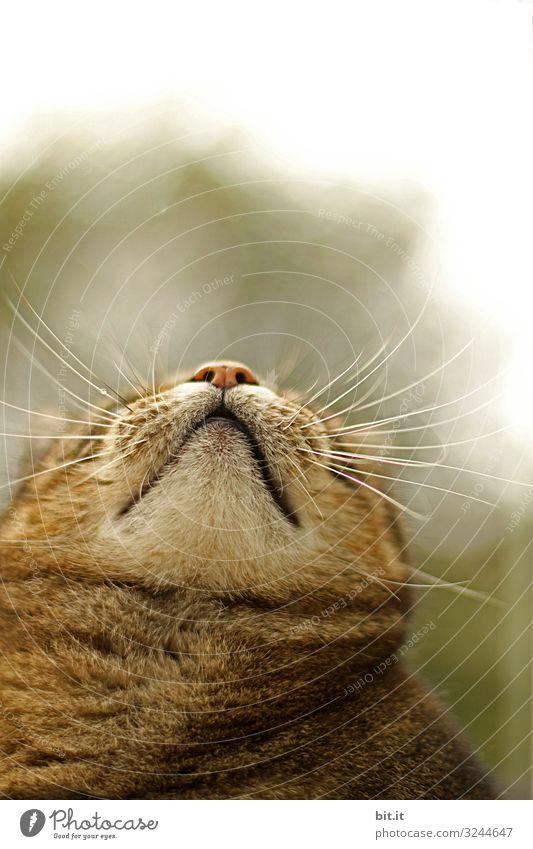 Ornithologenblick Umwelt Natur Himmel Tier Haustier Katze beobachten Blick Gesundheit Glück niedlich braun Tigerkatze Tigerfellmuster Vogel Blick nach oben
