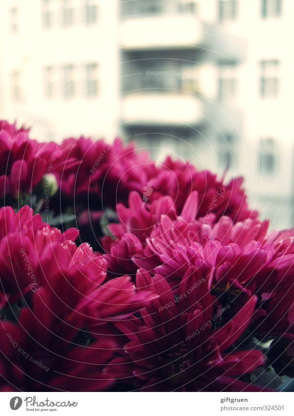 berliner gewächs Pflanze Blume Blüte Stadt Hauptstadt Stadtzentrum Haus Bauwerk Gebäude Architektur Fassade Balkon Fenster Blühend Gegenteil Stadtkind