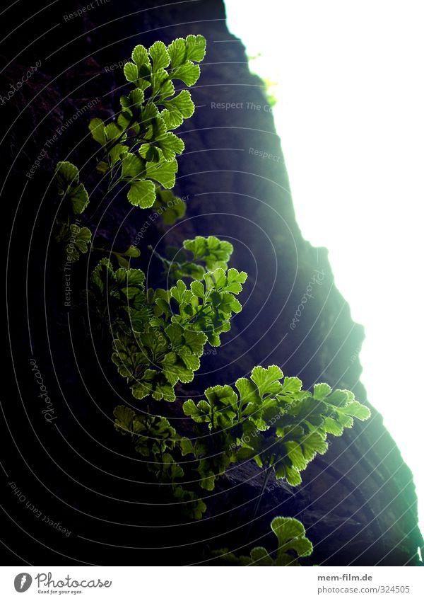 Hoffnung Umwelt Natur Landschaft Pflanze Gras Sträucher Blatt Grünpflanze Farrn Garten Gefühle Farbfoto Außenaufnahme Detailaufnahme Makroaufnahme Sonnenlicht