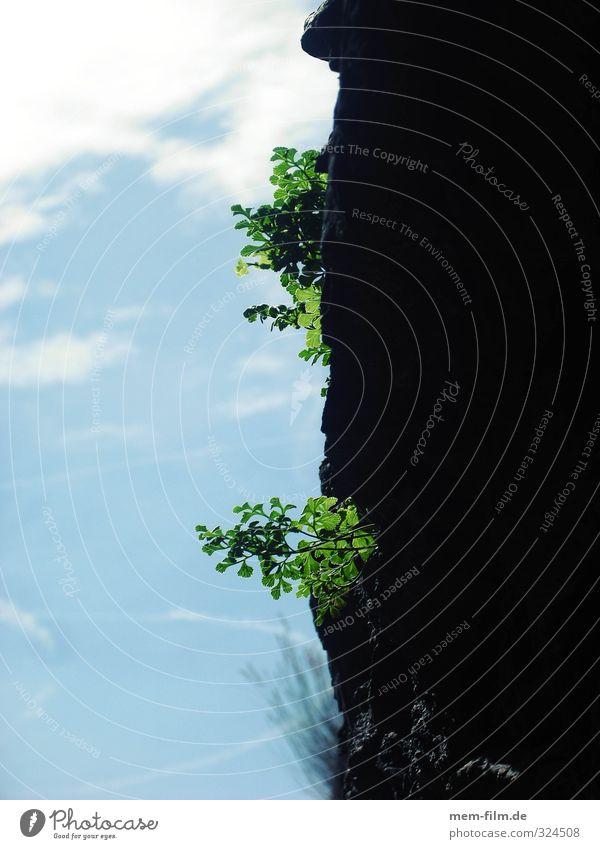 festhalten! Natur blau grün Blatt Umwelt Gras Wachstum Kraft Farn Grünpflanze Jungpflanze