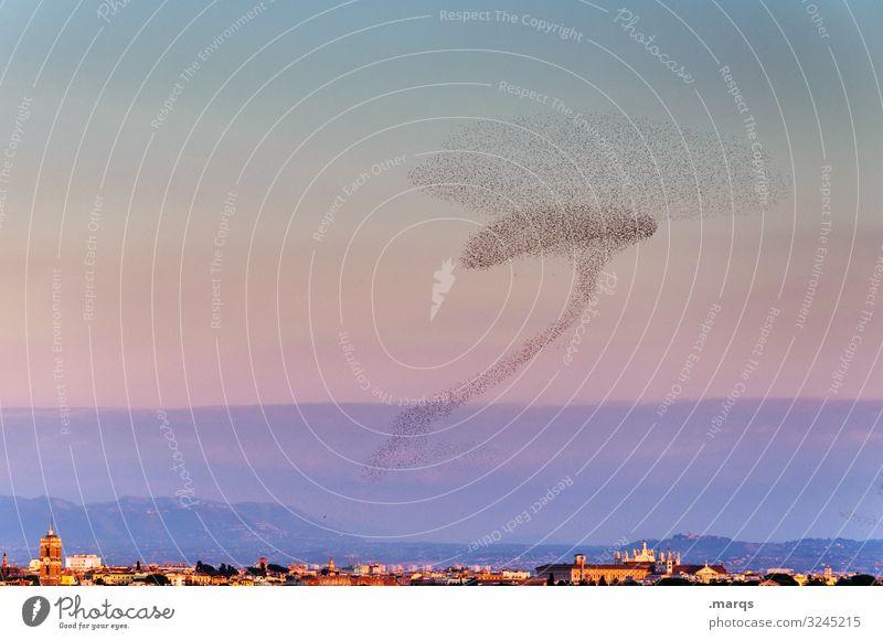 Römischer Schwarm Natur Pflanze Tier Himmel Horizont Sommer Herbst Schönes Wetter Stadt Star fliegen außergewöhnlich viele Klima Kommunizieren Ordnung planen