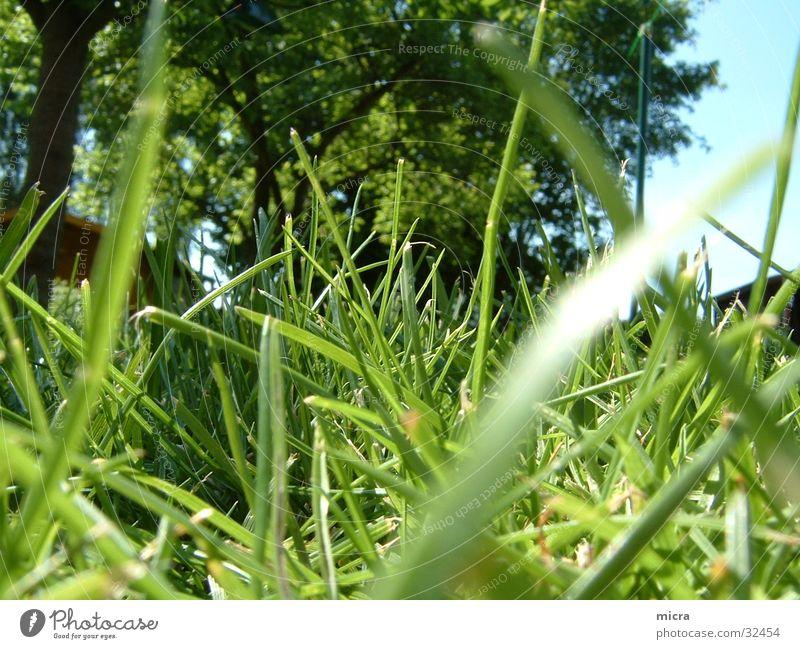 Graswald Baum grün Wiese Garten Rasen