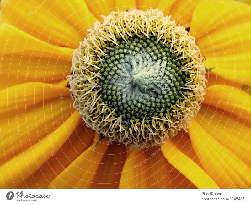 Blume Lifestyle Stil Design exotisch Garten Natur Sonnenlicht Pflanze Blatt Blüte Nutzpflanze Wiese Blühend Wachstum schön gelb Gefühle Stimmung Umwelt Farbfoto
