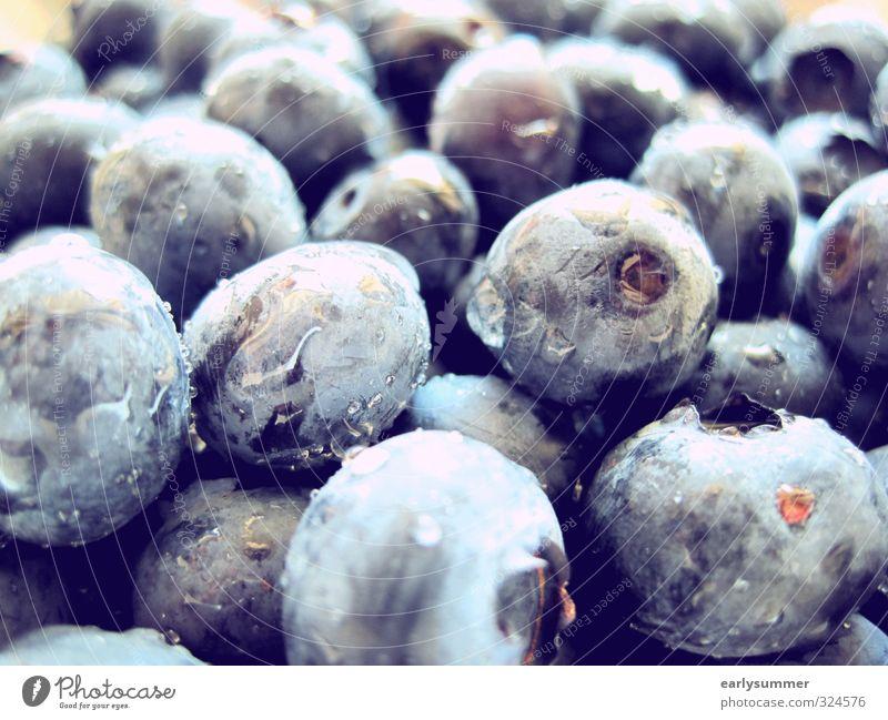 Blaue Beeren blau Wasser Sommer Gesunde Ernährung Gesundheit Essen Garten Lebensmittel Regen Frucht nass süß Reinigen violett Ernte