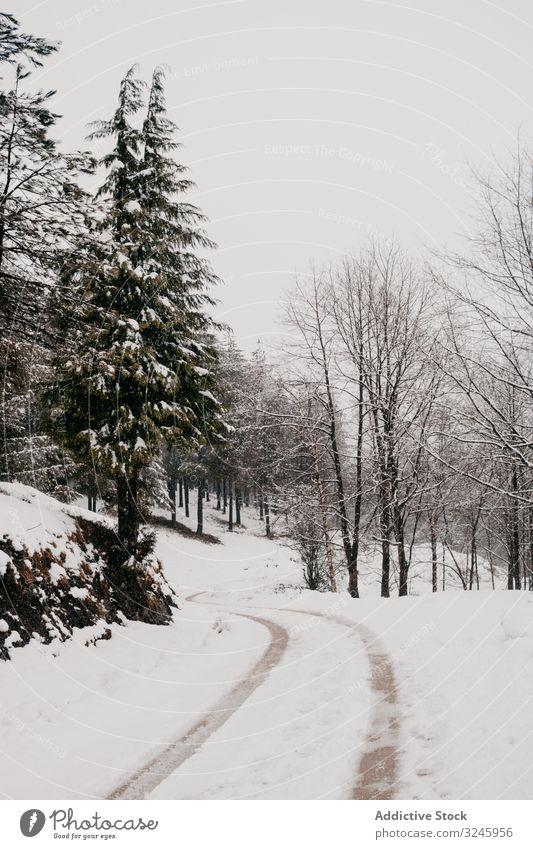 Winterwald mit verschneiten Bäumen Schnee Baum Wald laublos gefroren Frost Wälder ruhig gebogen Lehnen Norwegen Natur stumm Landschaft leer minimalistisch