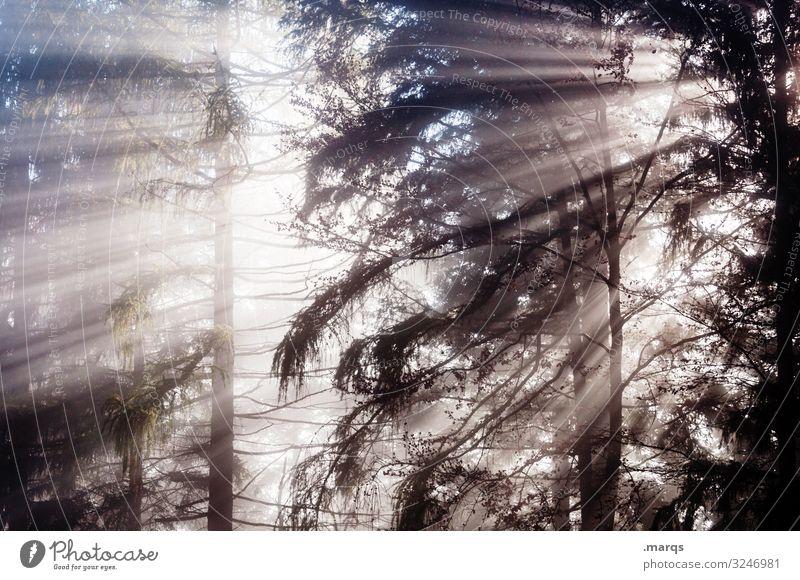 Erleuchtung Sonnenstrahlen Natur Stimmung Wald Nebel Klima Herbst Umwelt leuchten Urelemente Baum Morgen Jahreszeiten Lichterscheinung mystisch Sommer Mischwald
