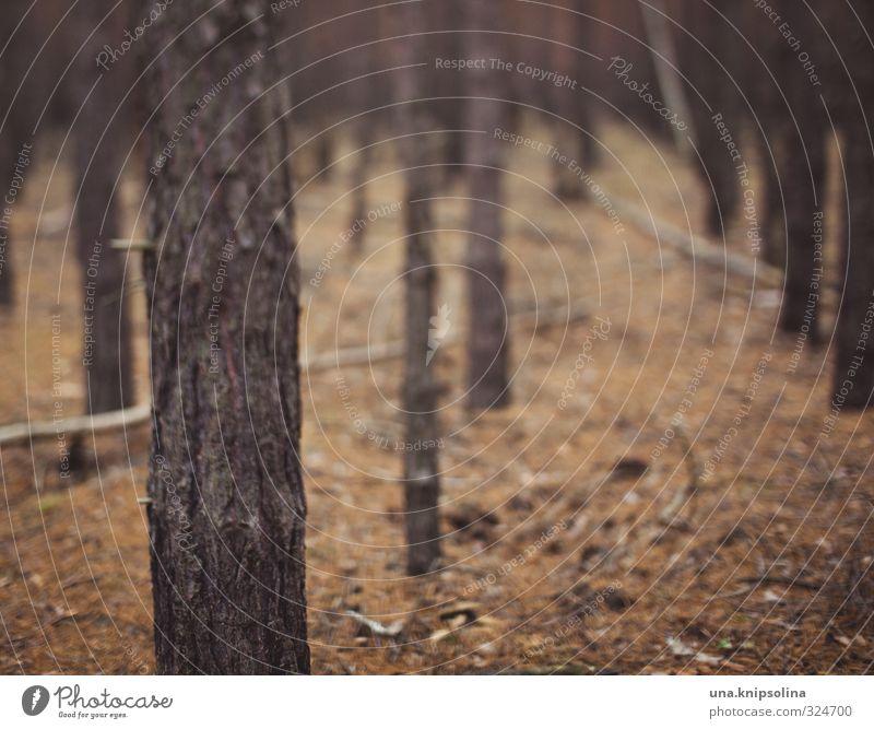 wald. bäume. nicht sehen. Natur Wald dunkel natürlich trist freelens Irritation Unschärfe Farbfoto Gedeckte Farben Außenaufnahme Menschenleer