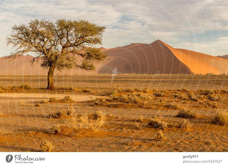 Die Namib Wüste Himmel Ferien & Urlaub & Reisen Natur Landschaft Baum Wolken Einsamkeit Ferne Wärme Umwelt Freiheit Sand Ausflug Horizont träumen Erde
