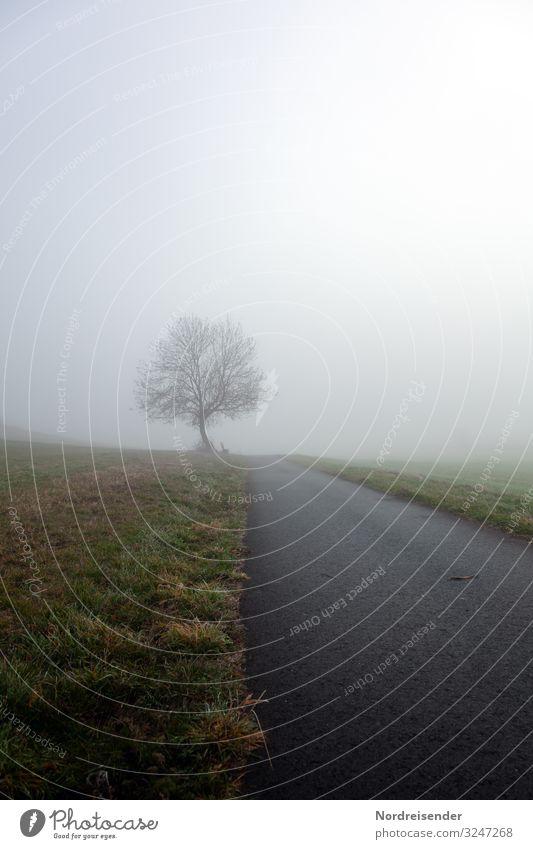 Nur im Jetzt wird man klar sehen können Himmel Natur Landschaft Baum Wolken ruhig Winter Straße Herbst Wege & Pfade Wiese Gras Zeit Stimmung Ausflug Regen