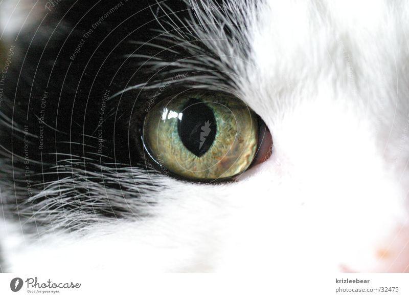 katzenauge 1 Katze Makroaufnahme schwarz weiß Schnauze Auge Katzenauge Nahaufnahme