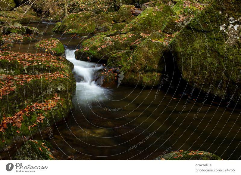 # 748 Bach Bayerischer Wald Wasserfall Langzeitbelichtung Herbst Blatt dunkel Moos Farbfoto ruhig friedlich