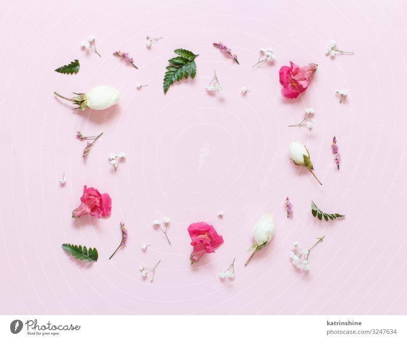 Blumen auf einem hellrosa Hintergrund Design Dekoration & Verzierung Hochzeit Frau Erwachsene Mutter oben rot Kreativität romantisch flache Verlegung