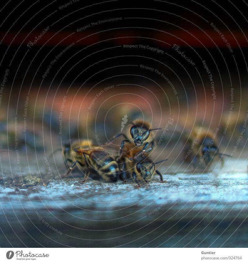 Bienen I Natur schwarz Bienenstock bedrohlich Holz Imker gelb Farbfoto Außenaufnahme Textfreiraum oben Tag Licht Schatten Unschärfe Zentralperspektive