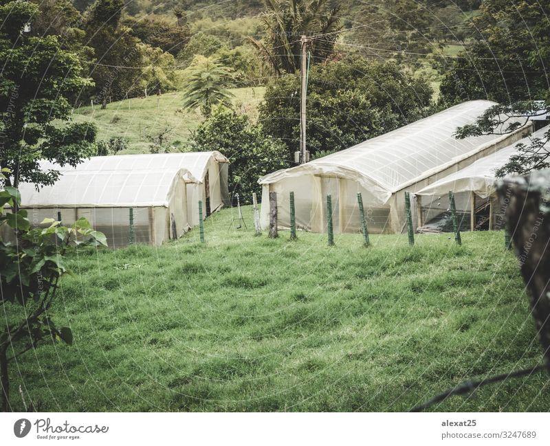 Gewächshaus auf dem Feld Gemüse Haus Gartenarbeit Industrie Technik & Technologie Kultur Natur Pflanze Wachstum frisch grün landwirtschaftlich Ackerbau