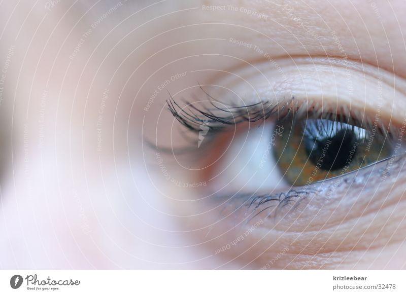 schau mir in die augen Mensch Kind Jugendliche grün Auge braun groß Wimpern Wimperntusche