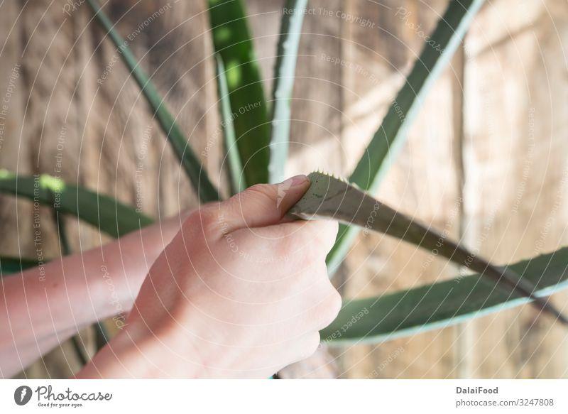 Natur Pflanze grün weiß Blatt Textfreiraum frisch nass Kräuter & Gewürze Sauberkeit Tropfen Beautyfotografie rein Botanik Stapel fließen