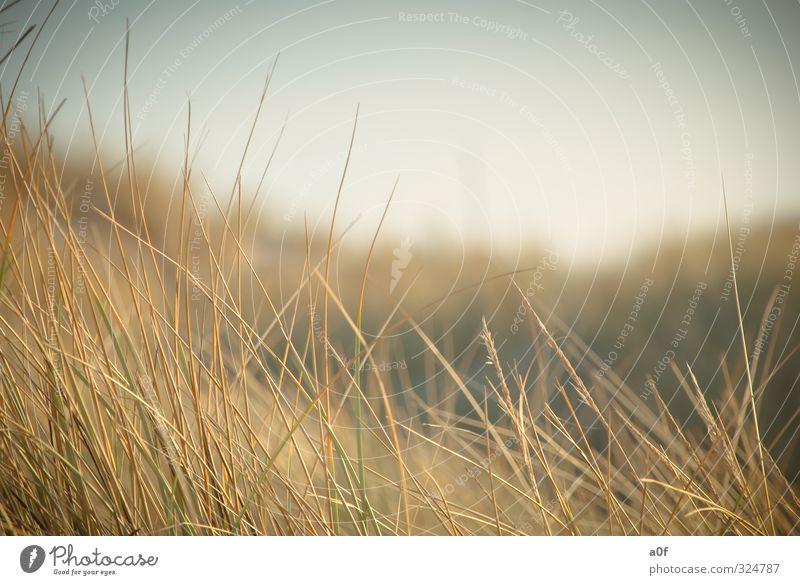 ...im Wind Natur Ferien & Urlaub & Reisen Pflanze Sommer Sonne Meer Erholung ruhig Landschaft Tier Strand gelb Umwelt Gras Spielen Sand