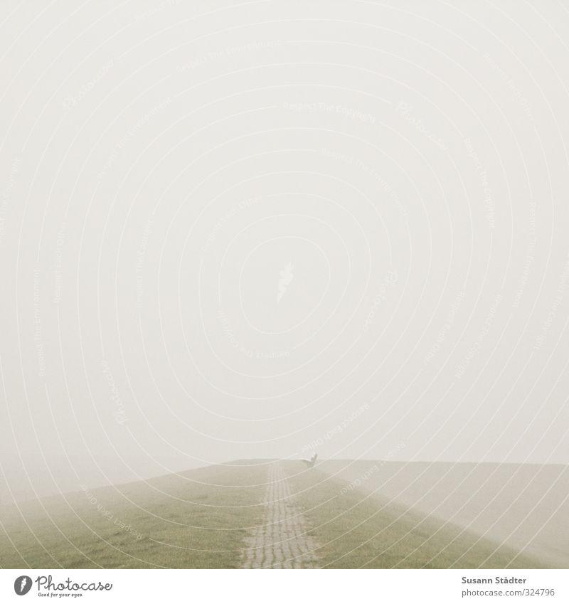 wohin gehts? Einsamkeit Landschaft Ferne Küste Wege & Pfade außergewöhnlich gehen Feld Nebel Bank gruselig Nordsee schlechtes Wetter Deich Spiekeroog