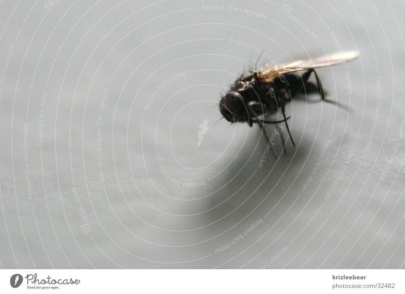 natürlicher tod Tod Fliege Insekt Chitin